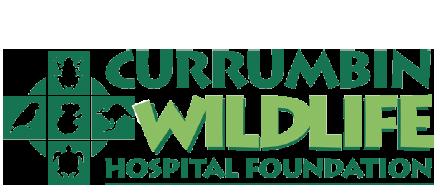 charity-logo-currumbin